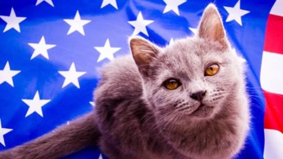 Our Capital's Finest Felines – A Look Back at Presidential Cats