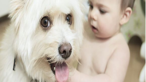What Your Dog Should Expect When You're Expecting!