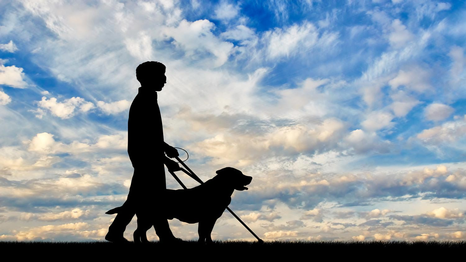 Guide Dogs Pet Insurance Reviews