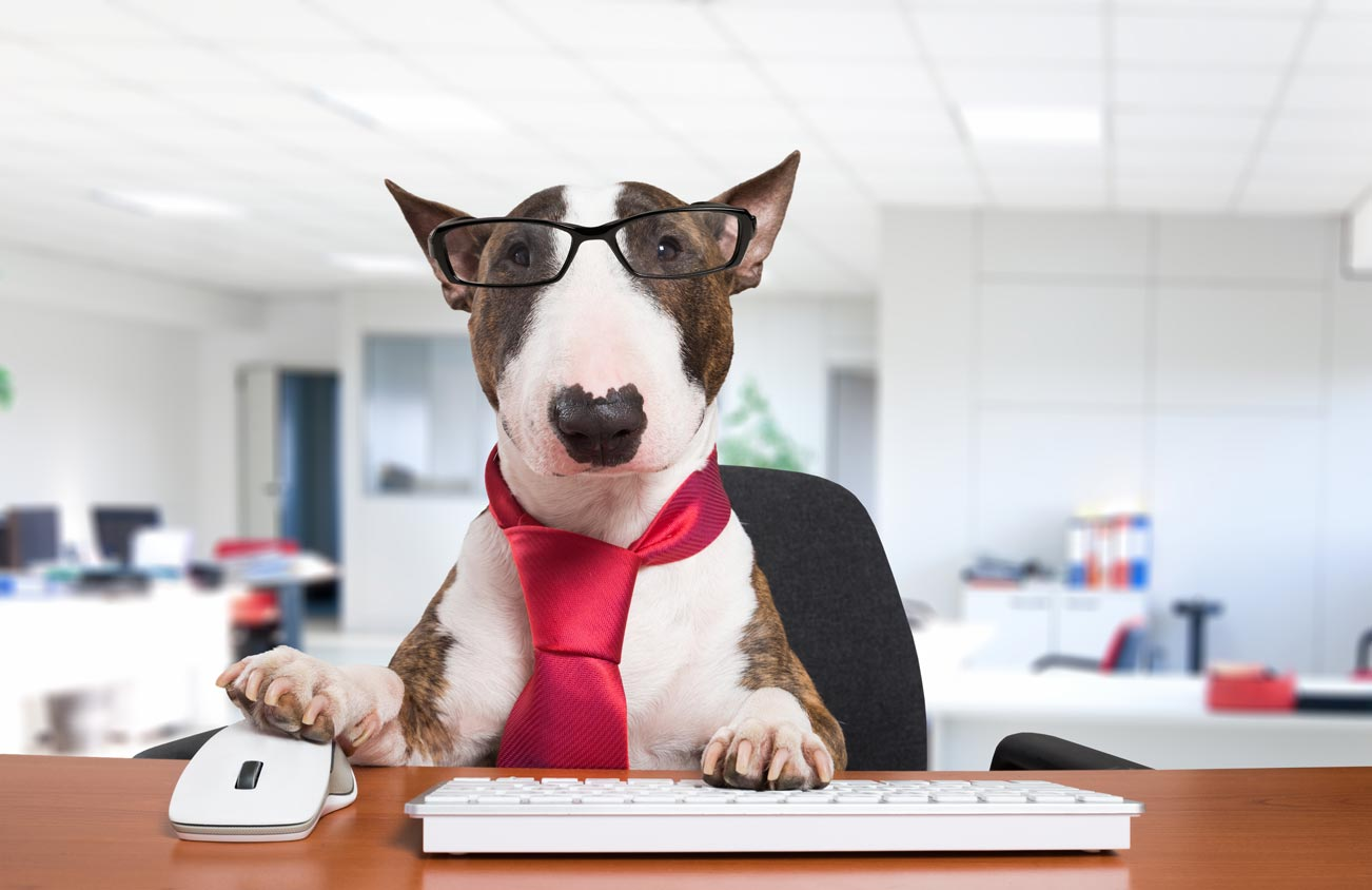 Best Dogs For Families Who Work